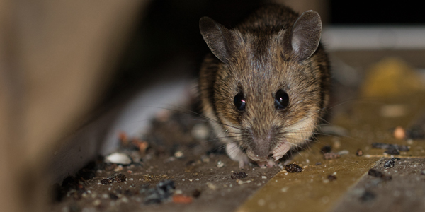 Bio Pro Boston Rodent Dropping Cleanup Services